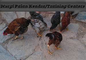 सरकारी मुर्गी पालन केन्द्र । Government Poultry Farming Training Centers.