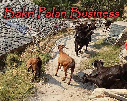 बकरी पालन कैसे शुरू करें । How to start Goat Farming Business in India.
