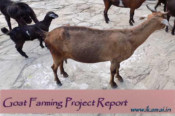 Goat Farming Project Report in Hindi.