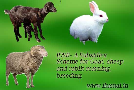IDSRR Scheme. बकरी, भेड़, खरगोश पालन के लिए सब्सिडी योजना।