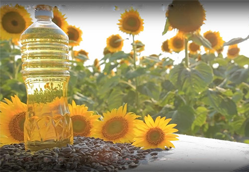 Sunflower Oil Making Business