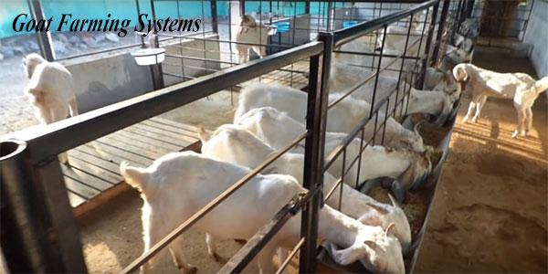 Goat Farming System in India | भारत में बकरी पालन प्रणाली।