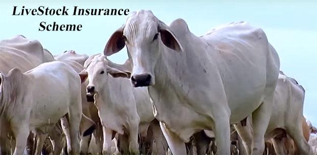 Livestock Insurance Scheme in Hindi. पशुधन बीमा योजना ।