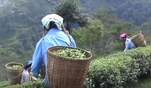 Tea Export Business Plan | चाय का एक्सपोर्ट बिजनेस कैसे शुरू करें |