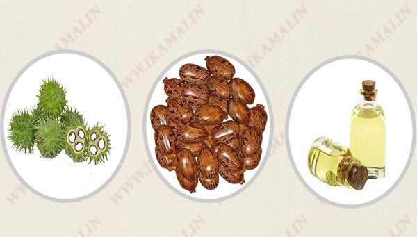 अरंडी का तेल बनाने का व्यापार | Castor oil Manufacturing Business in Hindi.