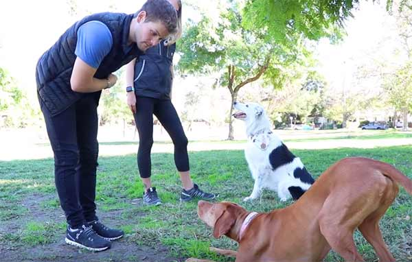 पशु प्रशिक्षक कैसे बनें? How to Become an Animal Trainer in India in Hindi.