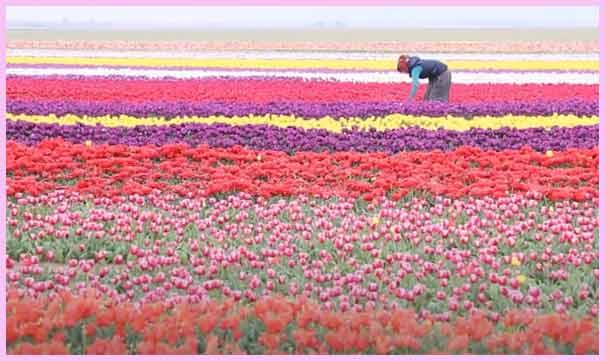 फूलों की खेती कैसे शुरू करें? How to Start a Flower Farming Business.