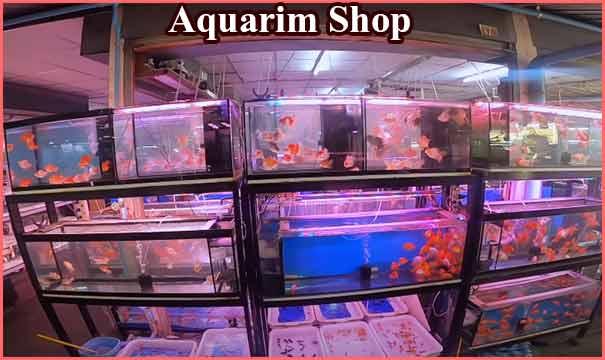 एक्वेरियम की दुकान कैसे शुरू करें? How to Start an Aquarium Shop in India.